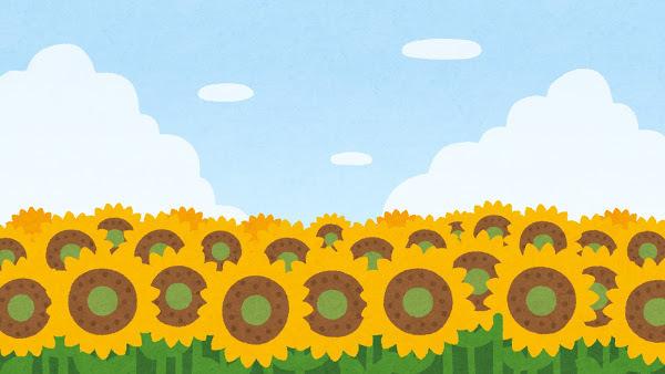 ひまわり畑のイラスト.jpg