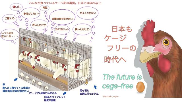 アニマルライツセンターHPより.jpg