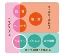 六大栄養素.jpg