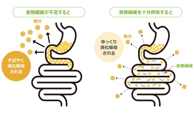 糖吸収と食物繊維.png