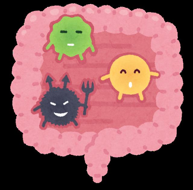腸内細菌.png