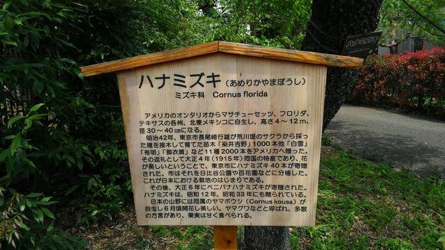tokyo walking (6).jpg